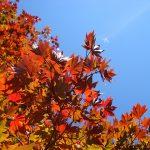 京都へ紅葉を観に行こうよ!見ごろ時期や外せない名所3選とは?