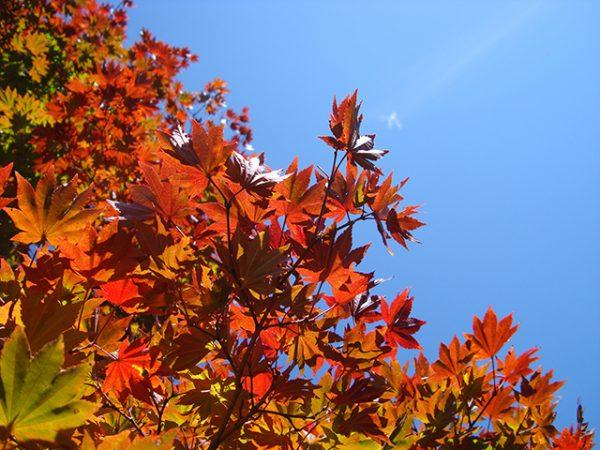 京都の紅葉はどこへ観に行く!?見ごろ時期や外せない名所3選とは?