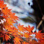 秋の味覚人気ランキング!旬な食べ物の賢い選び方とは?