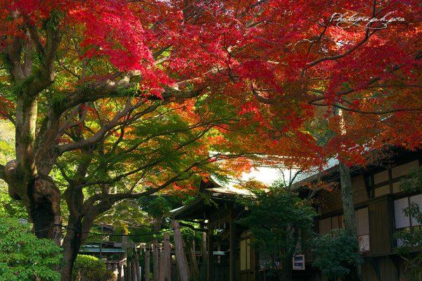 鎌倉宮(かまくらぐう)