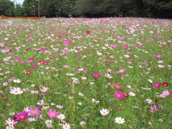 さいたま市:大宮花の丘農林公苑