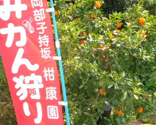静岡県藤枝市:柑康園(かんこうえん)