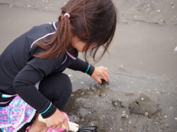 潮干狩りであさりとハマグリを効率よく採るコツ