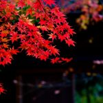鎌倉へ紅葉を観に行こうよ!見ごろ時期やイチオシの寺社3選とは?