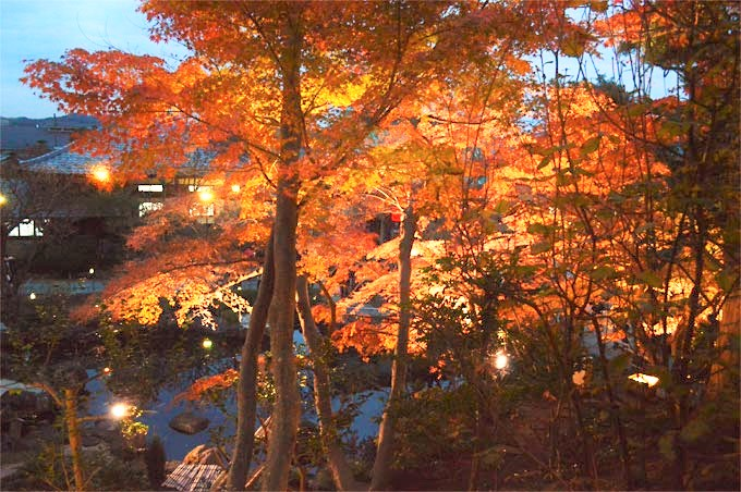 hasedera_garden_light_fall (2)
