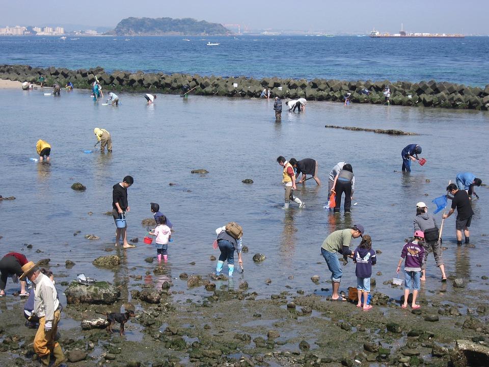 貝採り最中に気をつけること