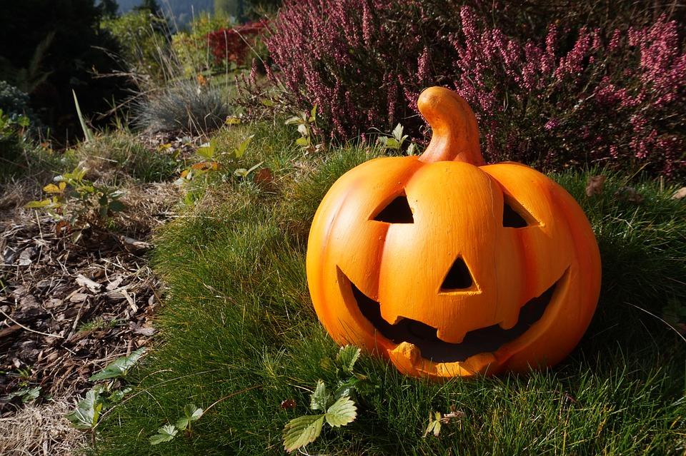 pumpkin-980587_960_720