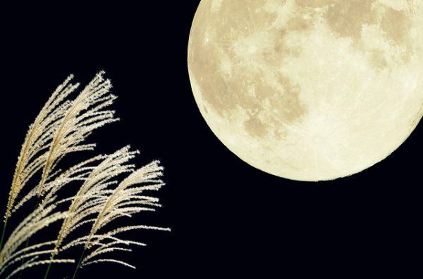 中秋の名月とは?お月見の由来とお月見に供える物の意味!