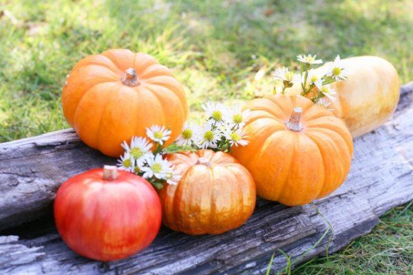かぼちゃの種類とは?