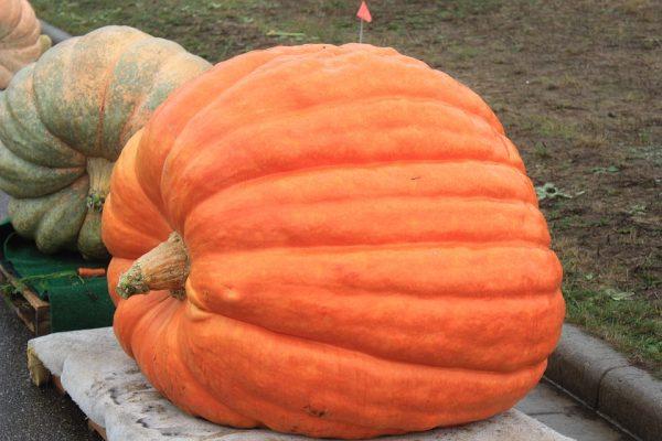 pumpkin-1093637_960_720