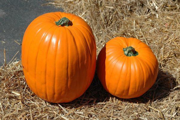 pumpkin-1572868_960_720