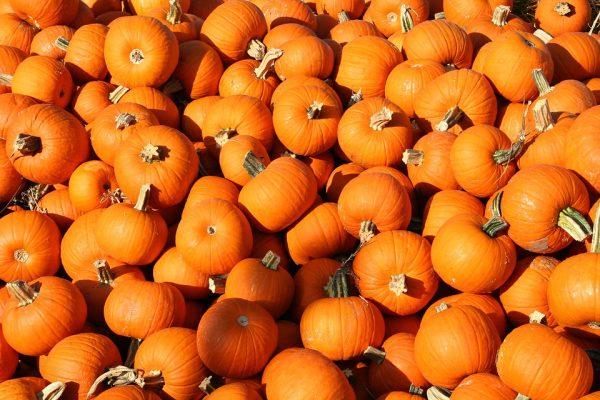 pumpkins-1249139_960_720