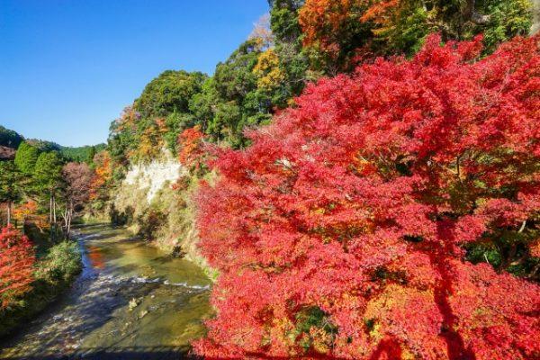 養老渓谷:幻想的に浮き上がる紅葉のライトアップ/千葉県