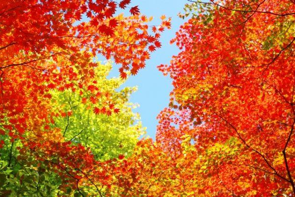 紅葉の色の変化と種類とは?