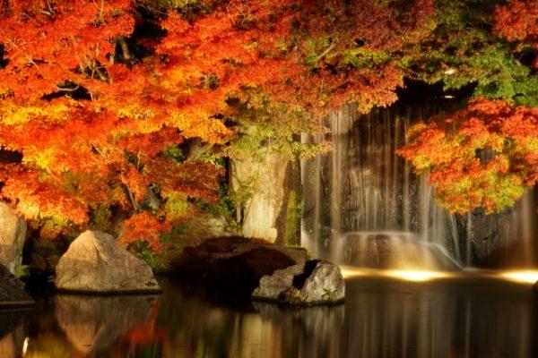 ライトアップされる紅葉のオススメ5選!絶景を楽しもう!【関東編】