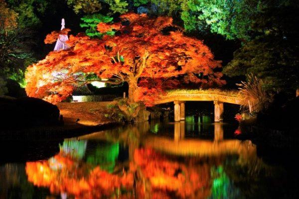 六義園:紅葉と歴史ある日本庭園のライトアップ/東京都