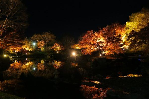 桜山公園:紅葉と冬桜のライトアップ/群馬県