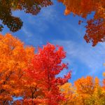 紅葉狩りの意味や由来は?紅葉の色が変わる理由と種類とは?