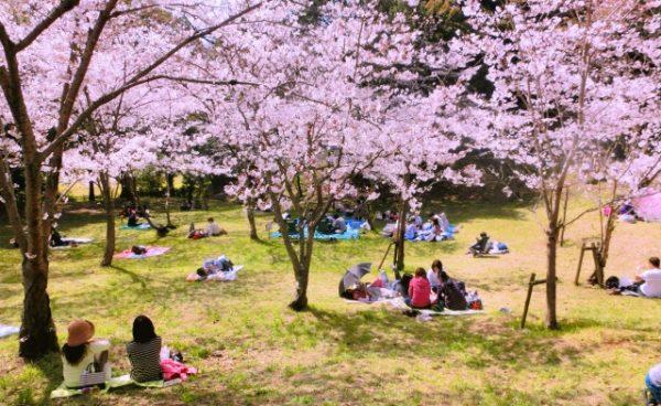 東京のお花見スポット!桜の名所おすすめ5選