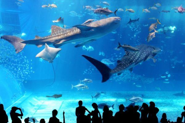 水族館で癒されデート