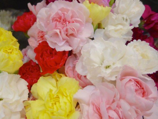 花言葉が良い意味を持たないカーネーションの色