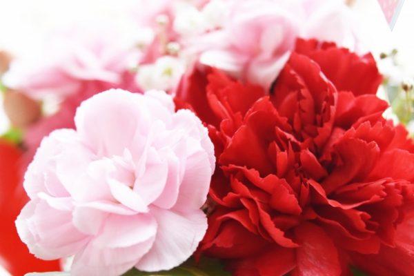 花言葉が良い意味を持つカーネーションの色