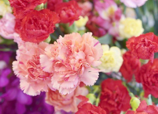 カーネーションの色別の花言葉