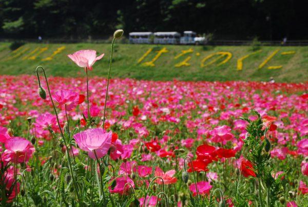 横須賀市:くりはま花の国
