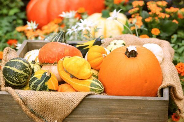 ハロウィンのかぼちゃを長持ちさせるためには?