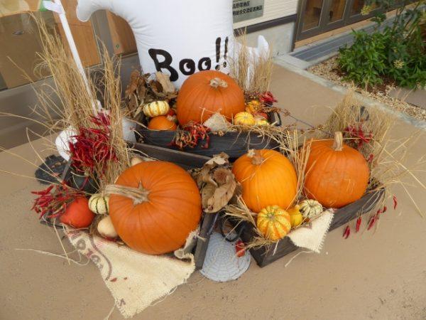 ハロウィンのかぼちゃの保存場所と保存方法とは?