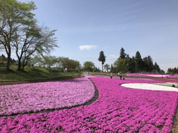 市貝町芝ざくら公園/栃木県