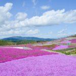 芝桜の名所ならココだ!関東おすすめスポット5選