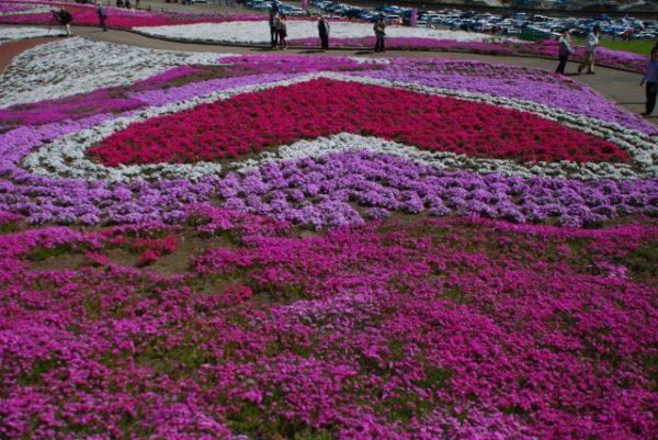みさと芝桜公園/群馬県